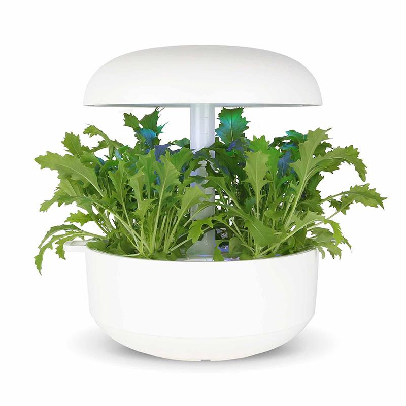 Frökapsel till Smart Garden inomhusodling - Brassica rapa var. japonica
