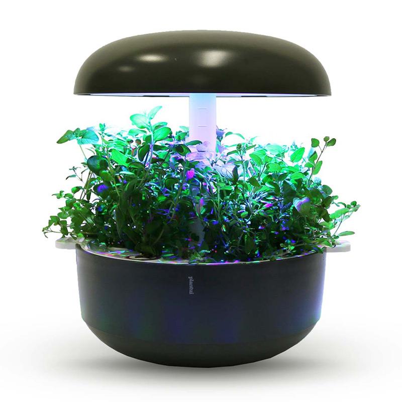 Frökapsel till Smart Garden inomhusodling - Origanum vulgare