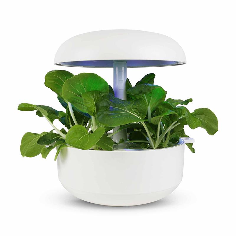 Frökapsel till Smart Garden inomhusodling - Brassica rapa var. chinensis