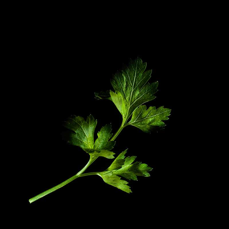 Frökapsel Plantui Smart Garden - Persilja, slätbladig, Frökapsel till Smart Garden inomhusodling - Petroselinum crispum var. neapolitanum