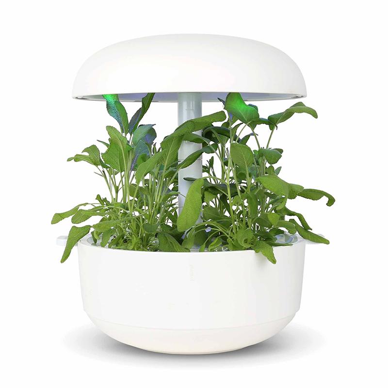 Frökapsel till Smart Garden inomhusodling - Salvia officinalis