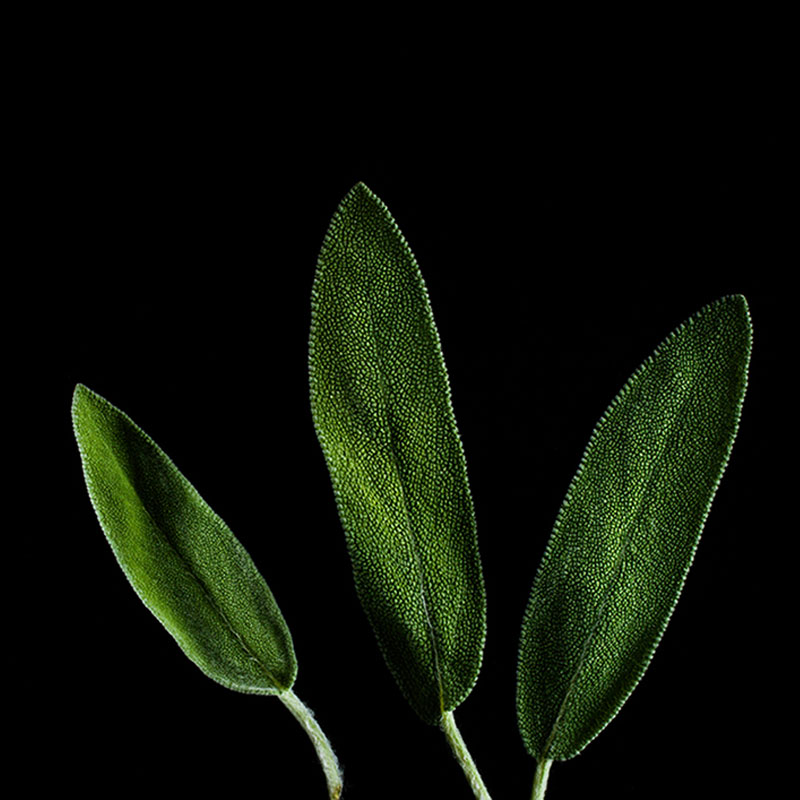 Frökapsel Plantui Smart Garden - Salvia, Frökapsel till Smart Garden inomhusodling - Salvia officinalis