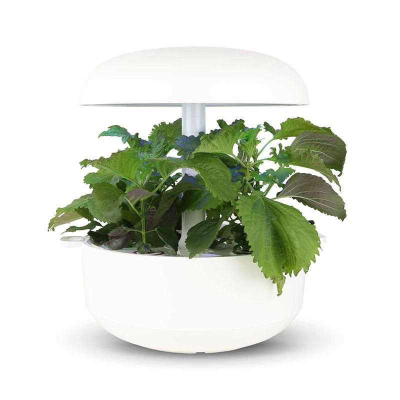 Frökapsel till Smart Garden inomhusodling - Perilla frutescens Nankinensis