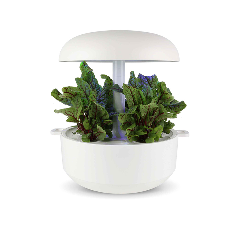 Frökapsel till Smart Garden inomhusodling - Rumex sanguineus