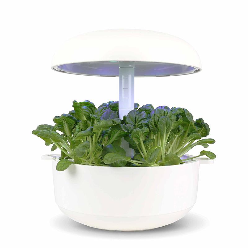 Frökapsel till Smart Garden inomhusodling - Brassica rapa var. rosularis