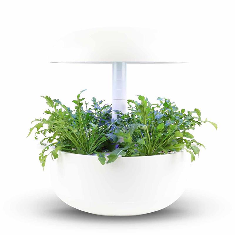 Frökapsel till Smart Garden inomhusodling - Diplotaxis tenuifolia