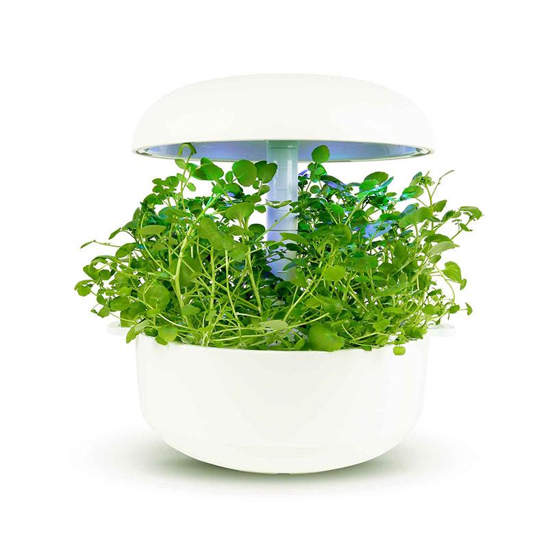 Frökapsel Plantui Smart Garden - Vattenkrasse-Fröer till Vattenkrasse