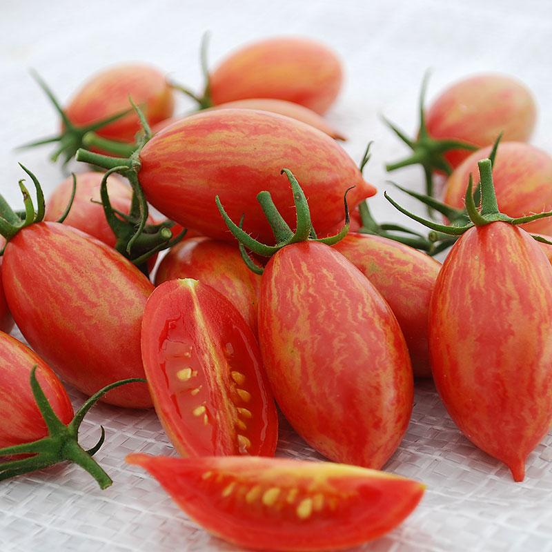 Tomat Artisan Pink Tiger-Frö till ovanlig tomat Artisan Pink Tiger