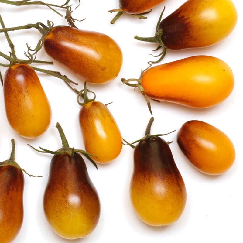 Tomat Indigo Pear Drops-Frö till ovanlig tomat Indigo Pear Drops