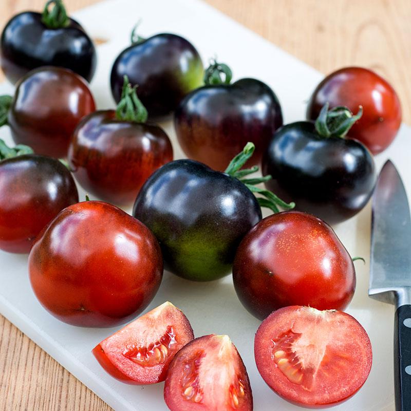 Tomat Indigo Rose-Frö till ovanlig tomat Indigo Rose