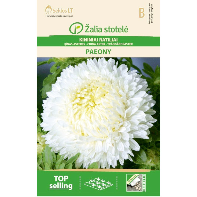 Aster Paeony, white-Frö till Aster - Paeony, white