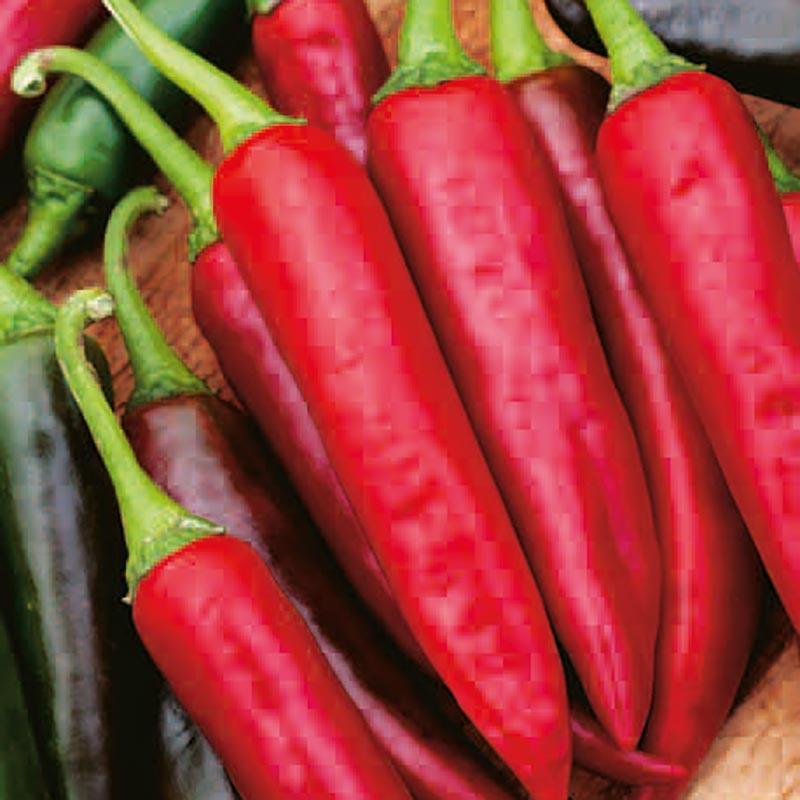 Frö till Chilipeppar - Gutera