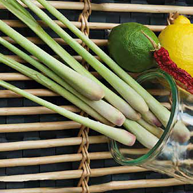 Frö till Citrongräs