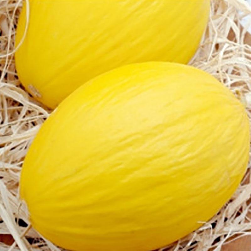 Frö till Melon - Ananas