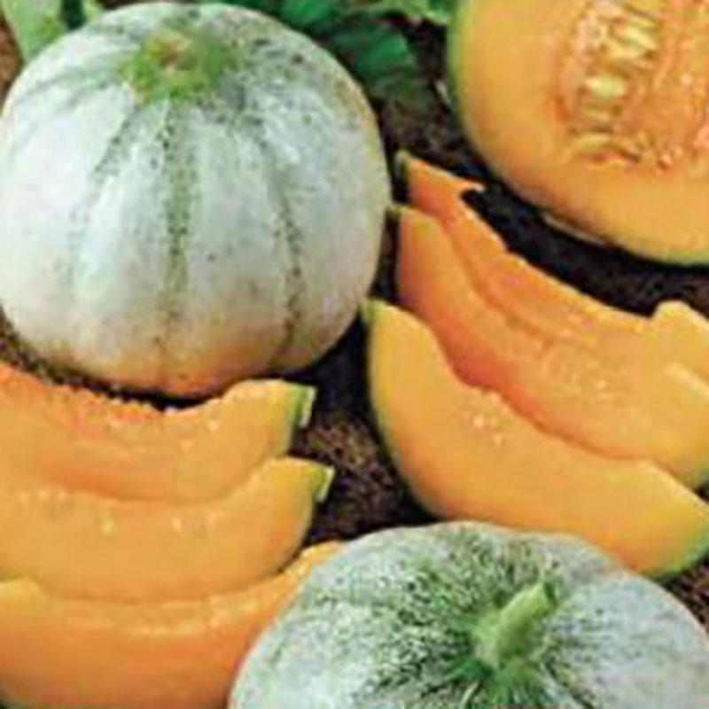 Frö till melon - Charentais