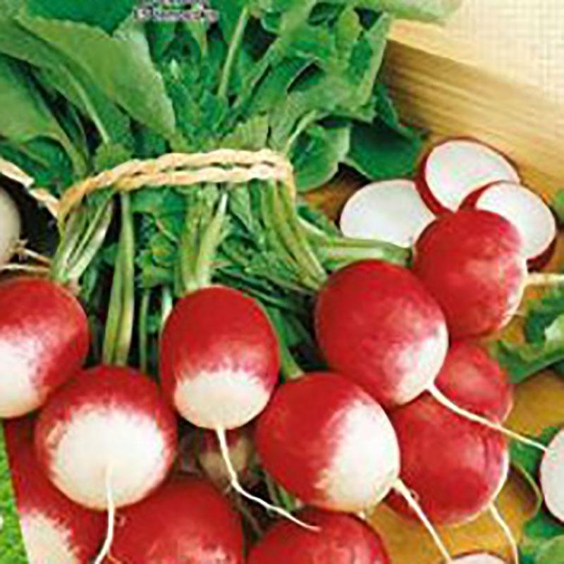 Frö till Rädisa Organic - Gaudry 2
