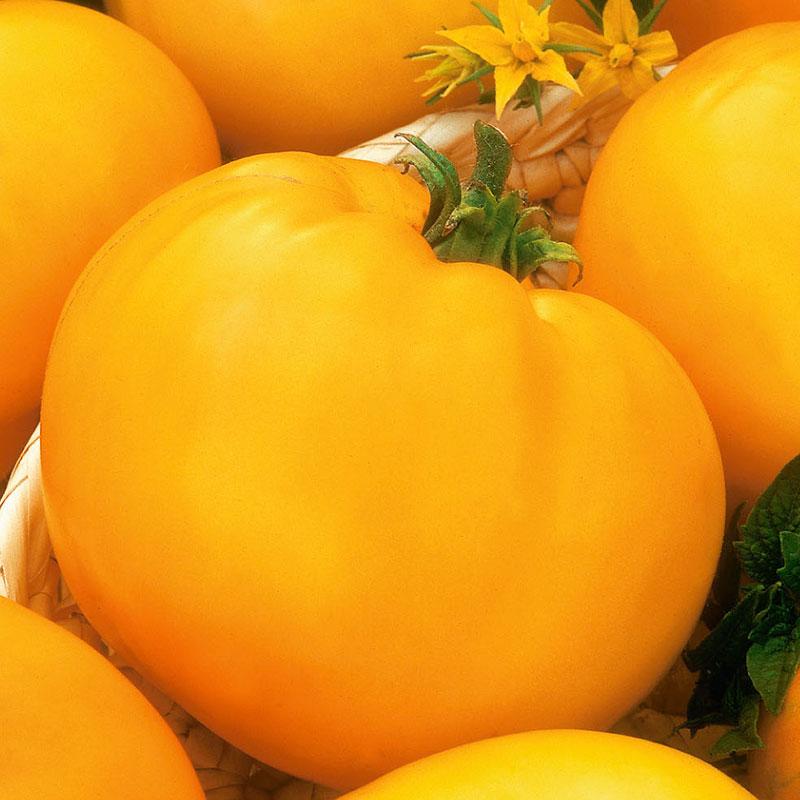 Tomat Ananas-Frö till Tomat - Ananas