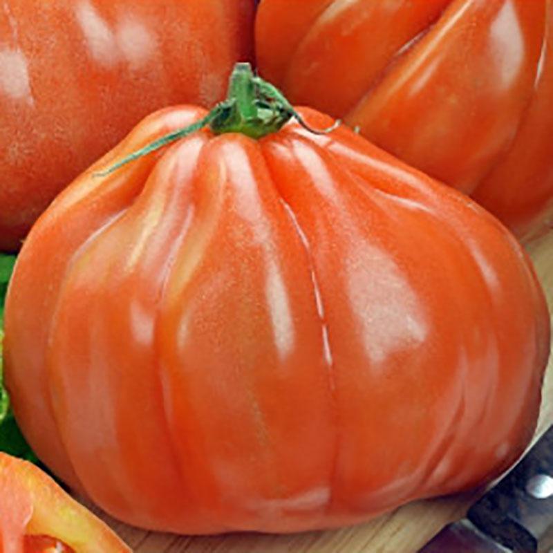Frö till Tomat - Aurea