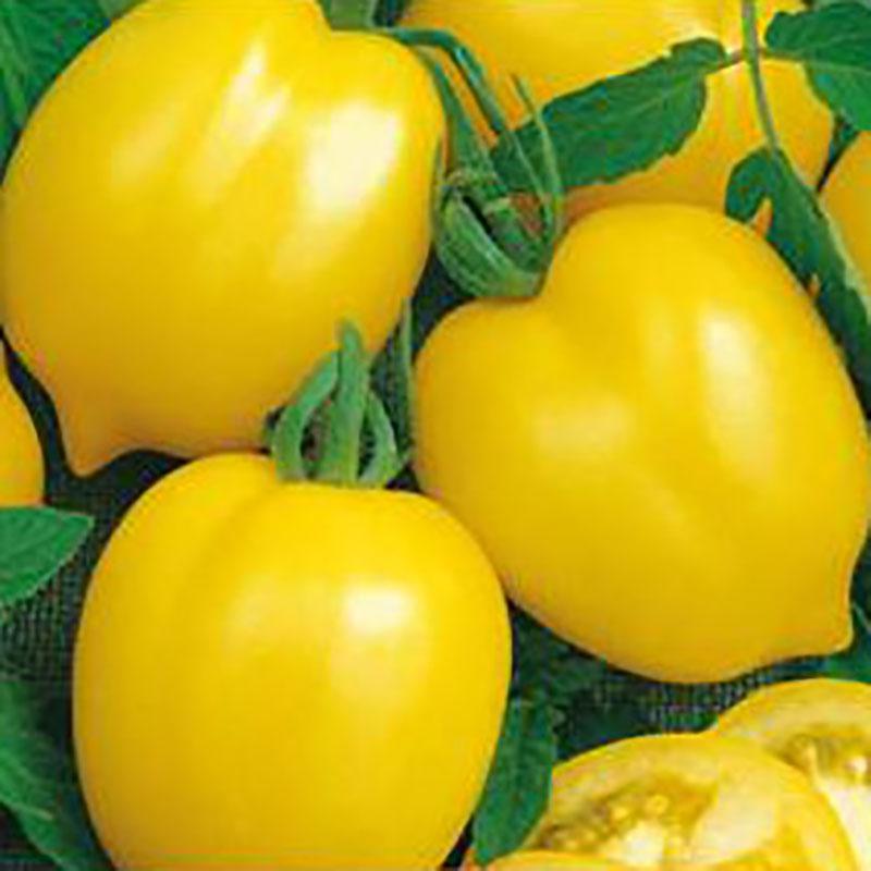 Frö till Tomat 'Citrina'