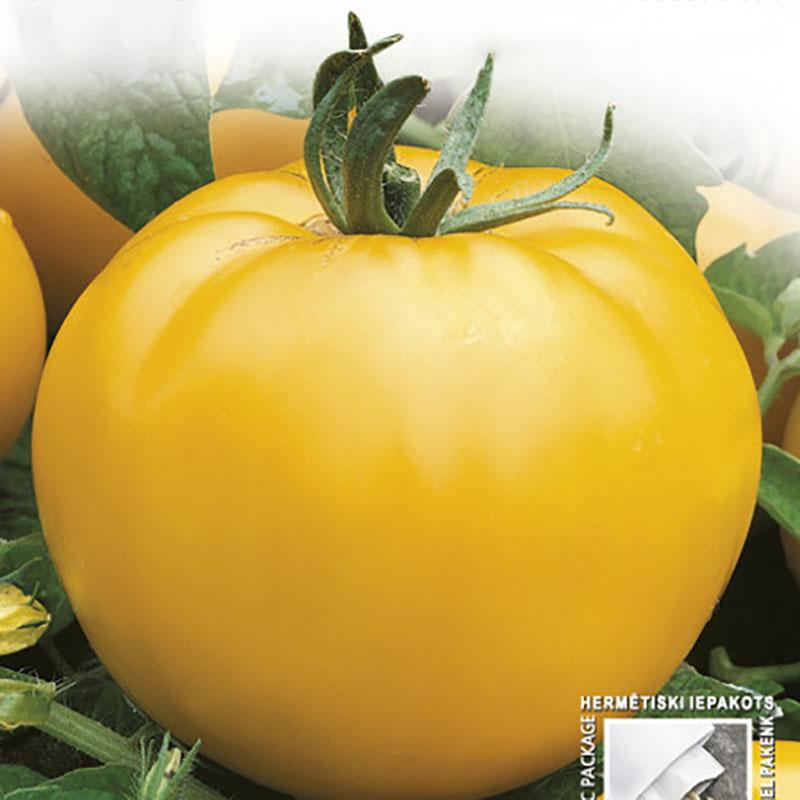 Frö till Tomat - Goldene Königin