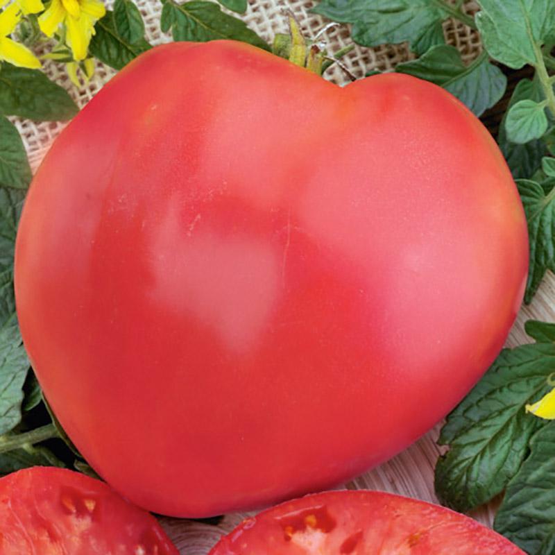 Frö till tomat - homestead