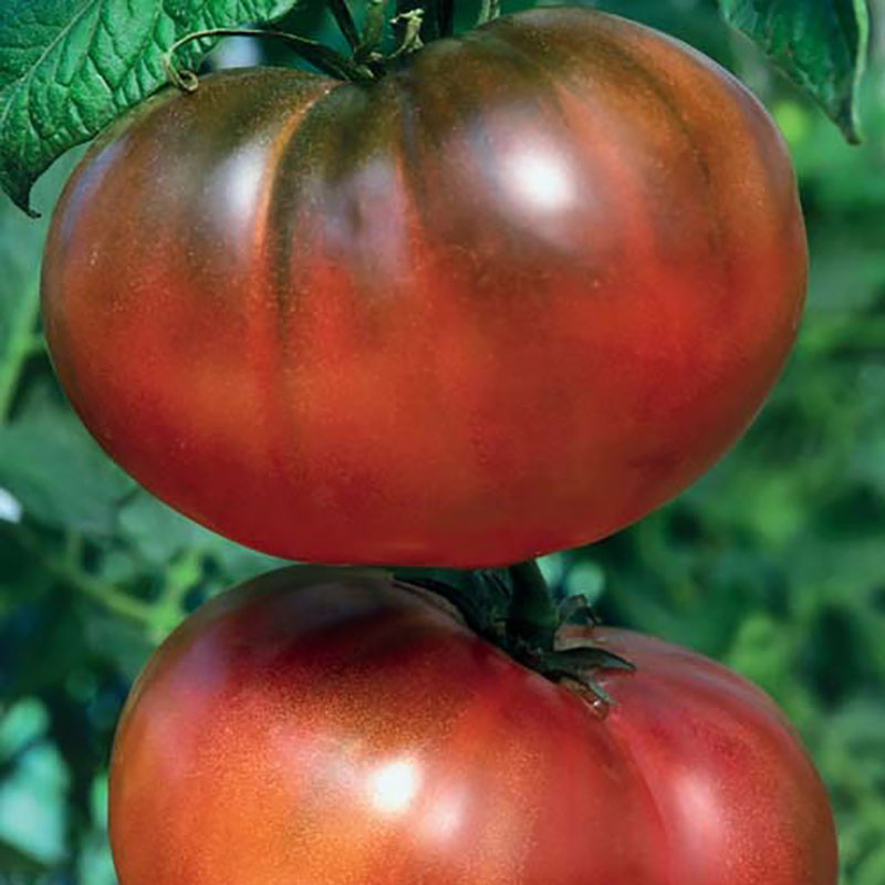Frö till Tomat - Noire de Crimee