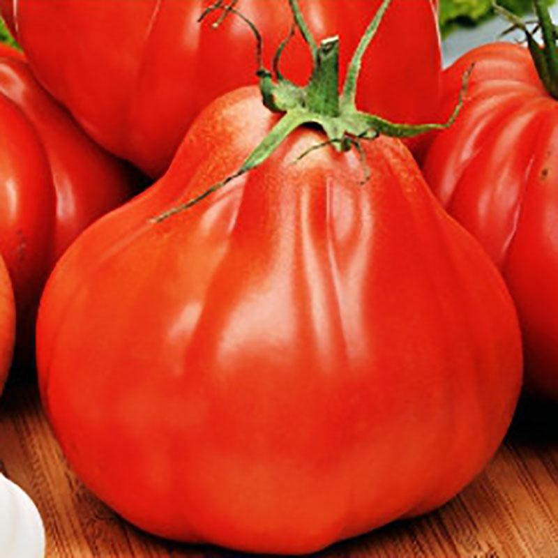 Frö till Tomat - Red Pear