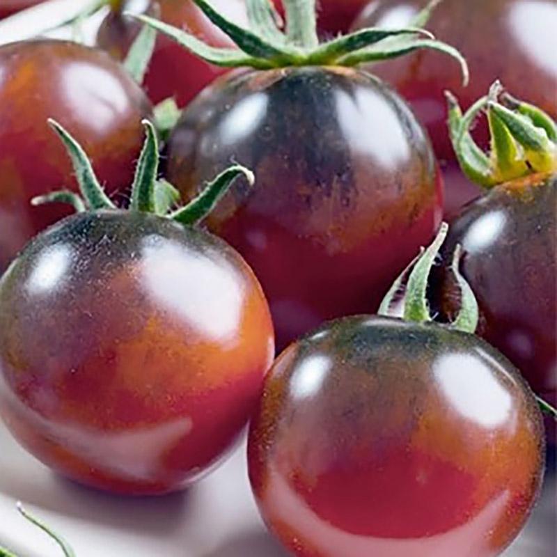 Tomat Indigo Rose, Frö till svart tomat - indigo rose
