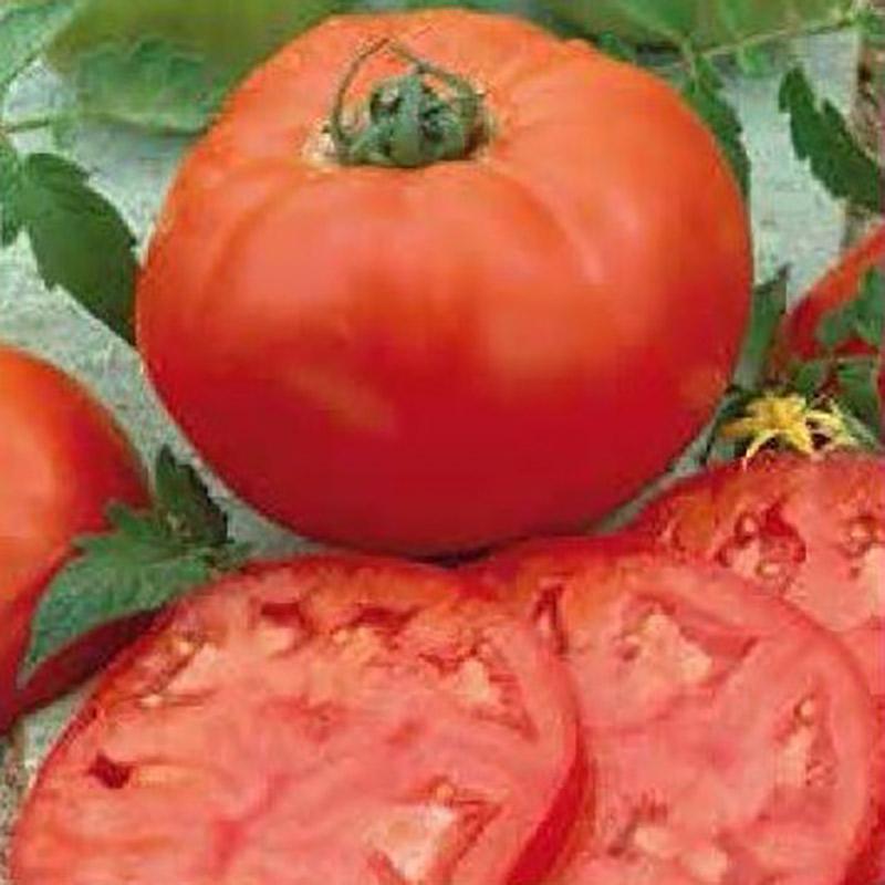 Tomat, Country Taste-Fröer till tomat tomato, country taste