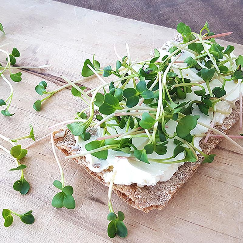 Groddfrö rädisa Saxa, Groddade rädisfrö på smörgås
