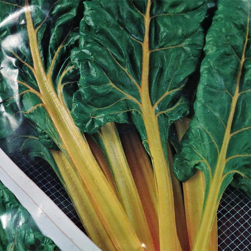 Mangold Bright Yellow-Frö till Mangold tvåårig köksväxt