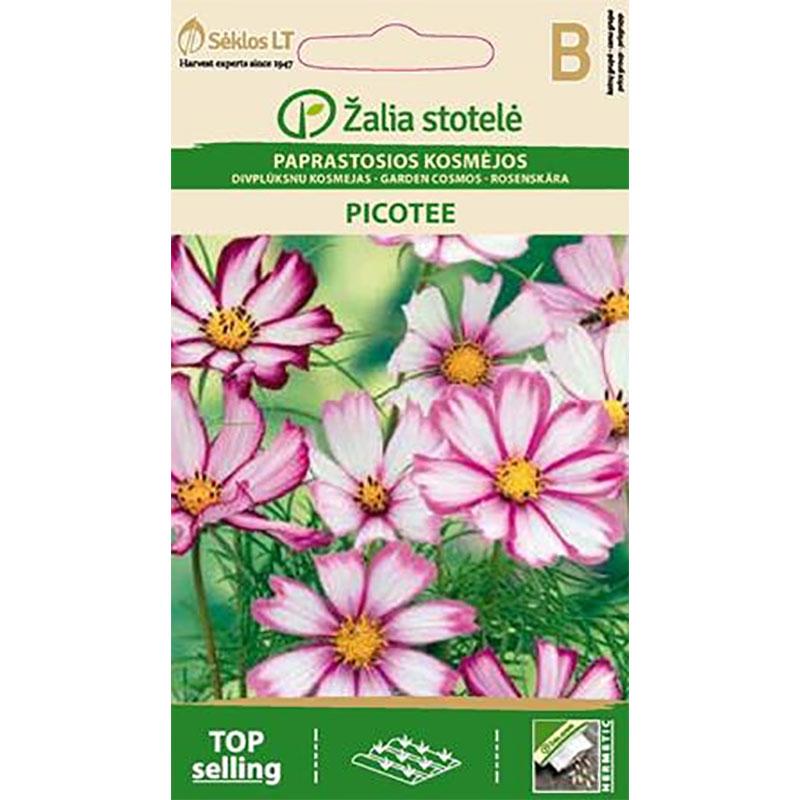 Rosenskära Garden Picotee,