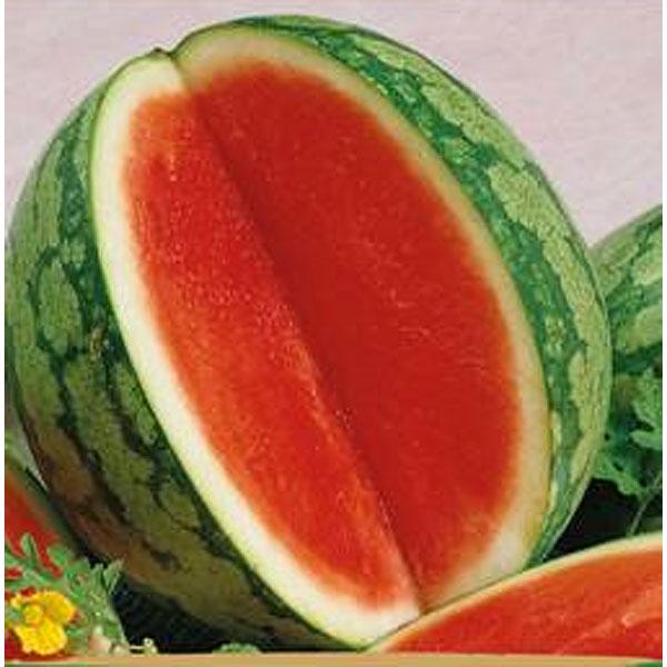 Vattenmelon Granate-Frö till Vattenmelon - Granate