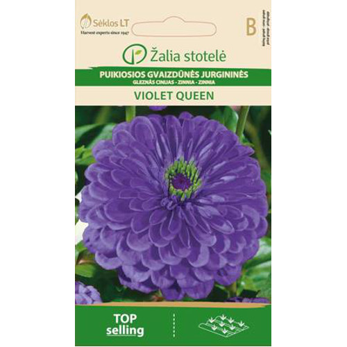 Zinnia Violet Queen-Frö till Zinnie - Violet Queen