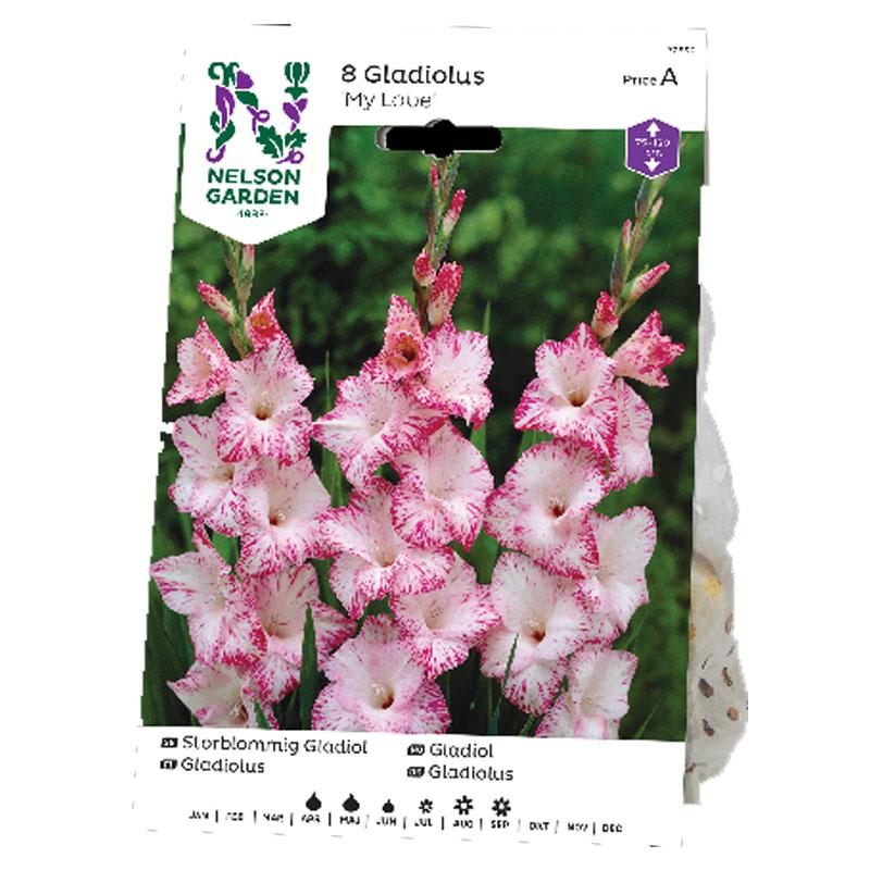 Knöl till gladiolus My Love