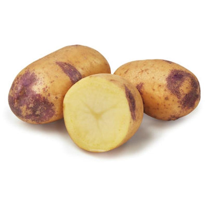 Sättpotatis till medeltidig potatis Blue Belle