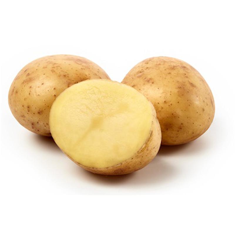 Sättpotatis till ekologisk potatis Connect