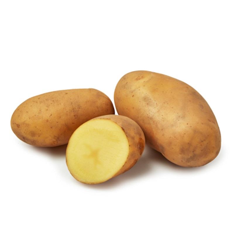 Sättpotatis till tidig potatis Gwenne