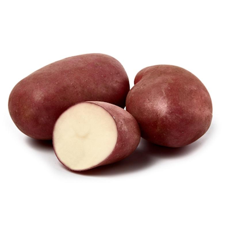 Sättpotatis till medeltidig potatis Monte Carlo