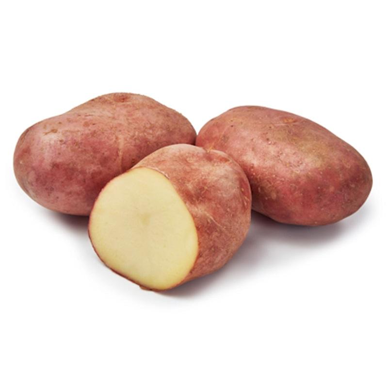Sättpotatis till tidig potatis Yona