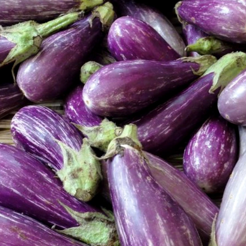 Aubergine 'Fairy Tail'