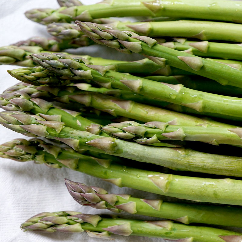 Frö till Sparris, Asparagus 'Mary Washington'
