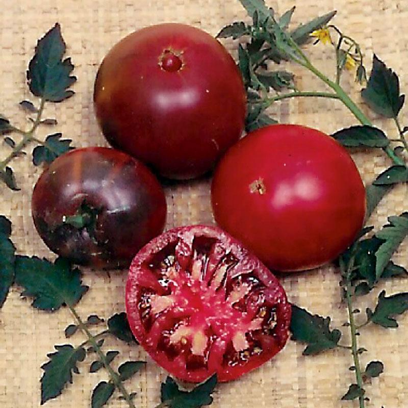 Frö till Tomat 'Black Krim'