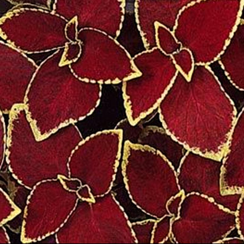 Palettblad Wizard Velvet Red