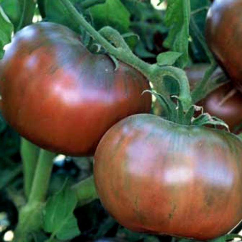 Tomat Cherokee Purple