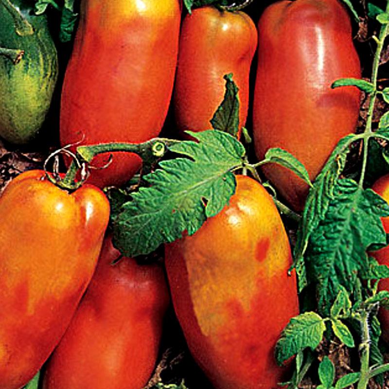 Tomat Super Italian Paste