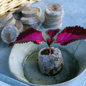 Torvbriketter för plantering av frö och sticklingar