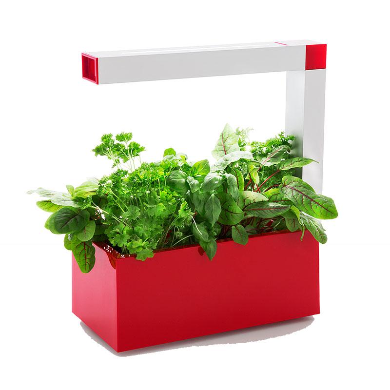 Herbie Inomhusodling - Herb:ie 23 - Ferrariröd-Herbie - Inomhusodling med hydrokultur
