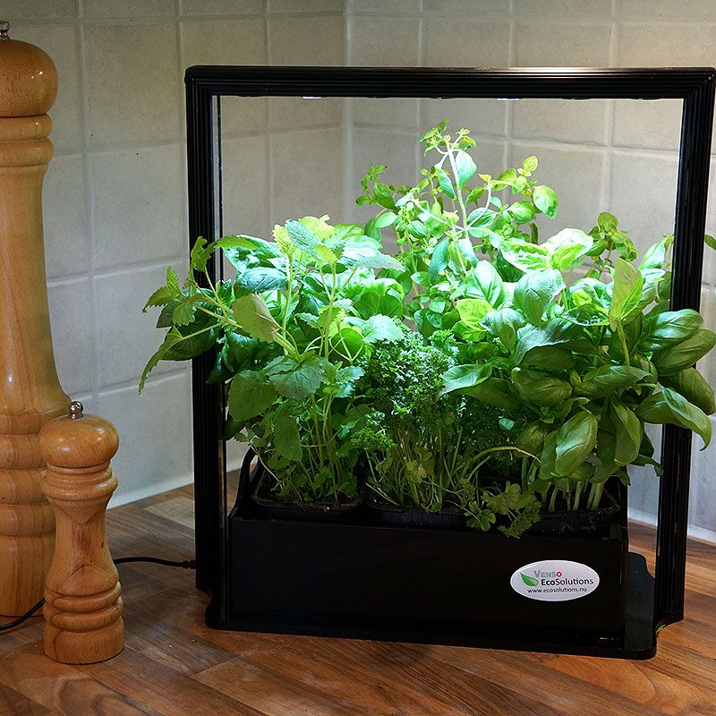 Eco Herb system för inomhusodling