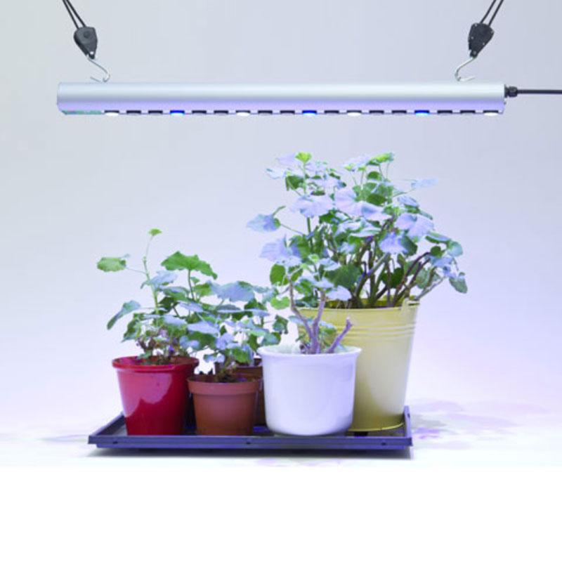 Växtarmatur Quattro 35W med blått ljus